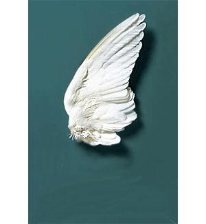 Swan wing